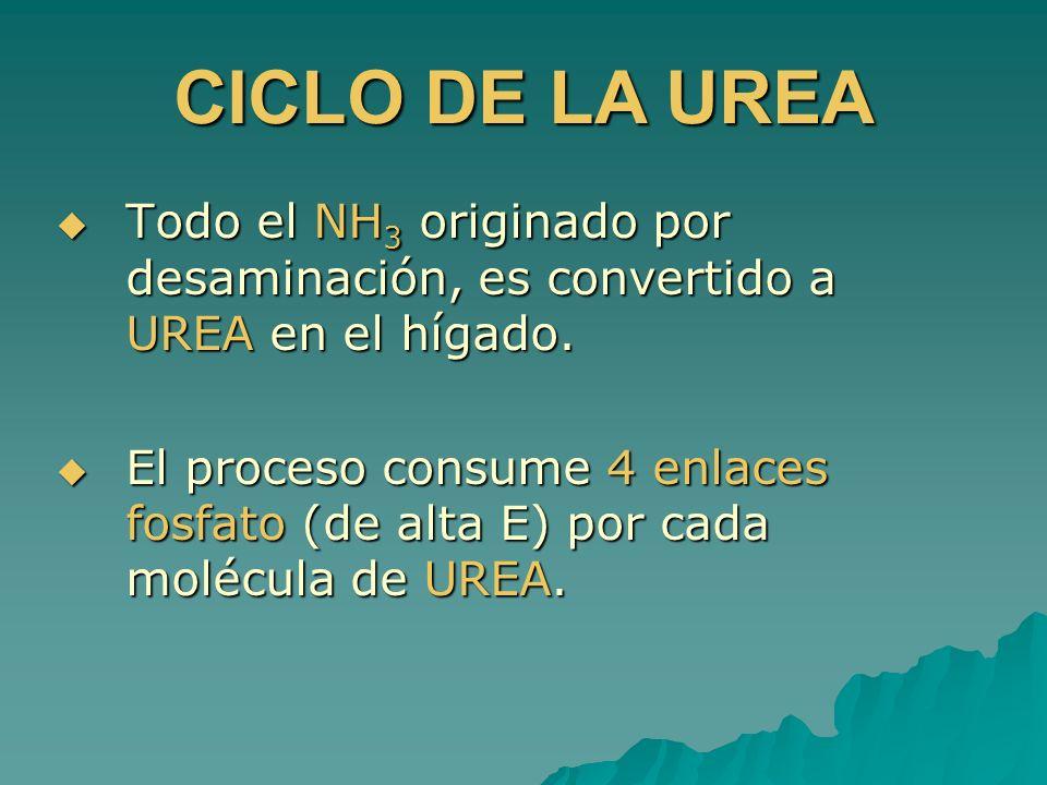 Todo el NH 3 originado por desaminación, es convertido a UREA en el hígado. Todo el NH 3 originado por desaminación, es convertido a UREA en el hígado