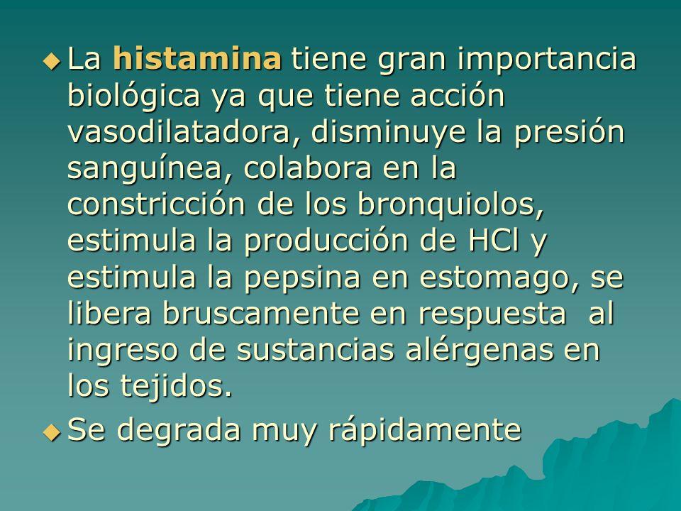 La histamina tiene gran importancia biológica ya que tiene acción vasodilatadora, disminuye la presión sanguínea, colabora en la constricción de los b