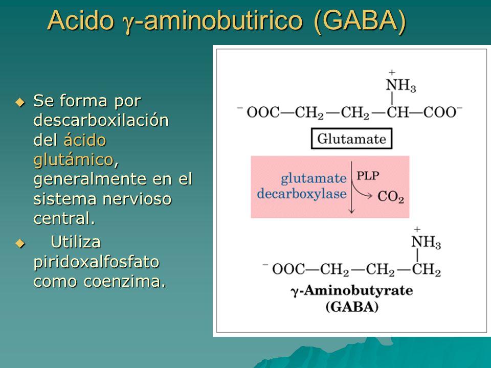 Acido -aminobutirico (GABA) Se forma por descarboxilación del ácido glutámico, generalmente en el sistema nervioso central. Se forma por descarboxilac