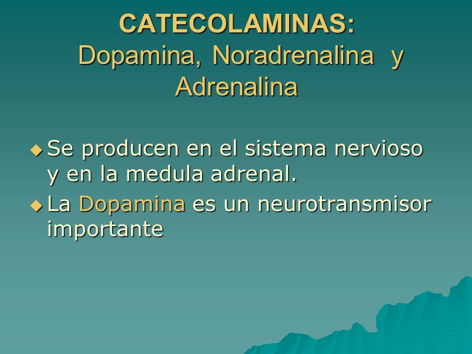 CATECOLAMINAS: Dopamina, Noradrenalina y Adrenalina Se producen en el sistema nervioso y en la medula adrenal. Se producen en el sistema nervioso y en