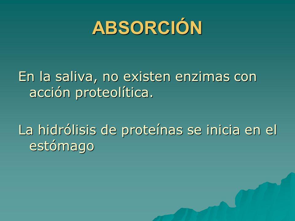ABSORCIÓN En la saliva, no existen enzimas con acción proteolítica. La hidrólisis de proteínas se inicia en el estómago