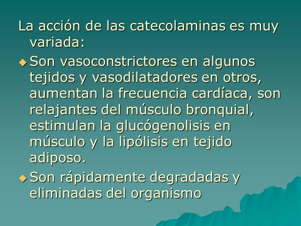 La acción de las catecolaminas es muy variada: Son vasoconstrictores en algunos tejidos y vasodilatadores en otros, aumentan la frecuencia cardíaca, s