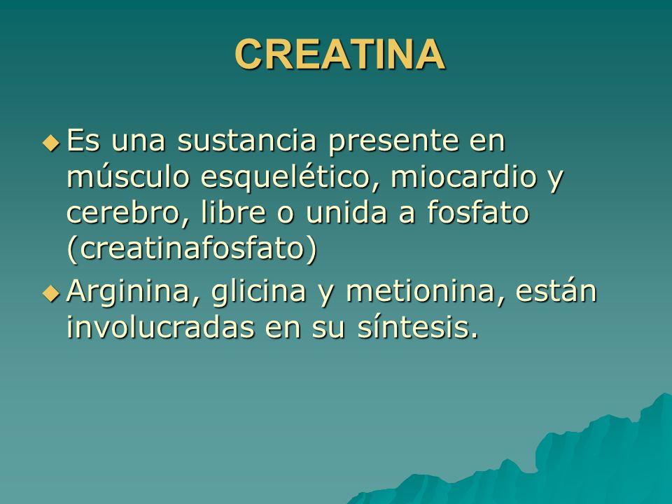 CREATINA Es una sustancia presente en músculo esquelético, miocardio y cerebro, libre o unida a fosfato (creatinafosfato) Es una sustancia presente en