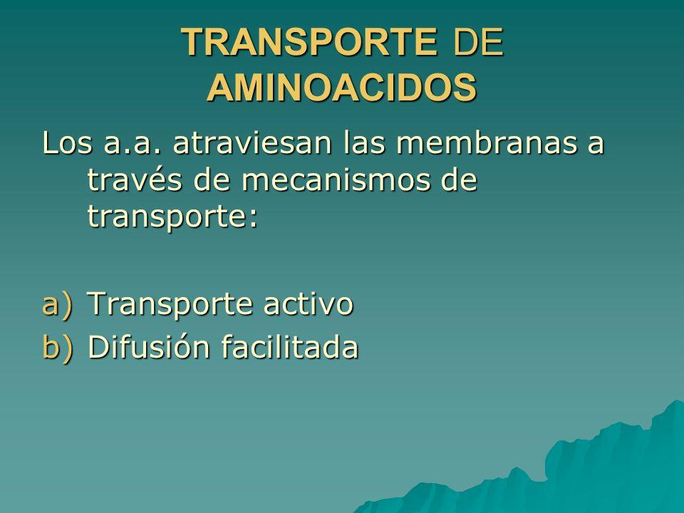 TRANSPORTE DE AMINOACIDOS Los a.a. atraviesan las membranas a través de mecanismos de transporte: a)Transporte activo b)Difusión facilitada
