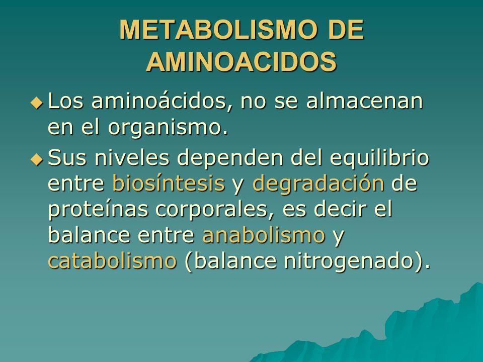 METABOLISMO DE AMINOACIDOS Los aminoácidos, no se almacenan en el organismo. Los aminoácidos, no se almacenan en el organismo. Sus niveles dependen de