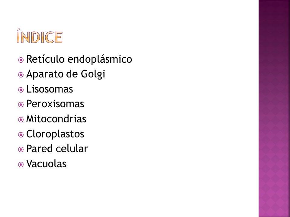 Retículo endoplásmico Aparato de Golgi Lisosomas Peroxisomas Mitocondrias Cloroplastos Pared celular Vacuolas