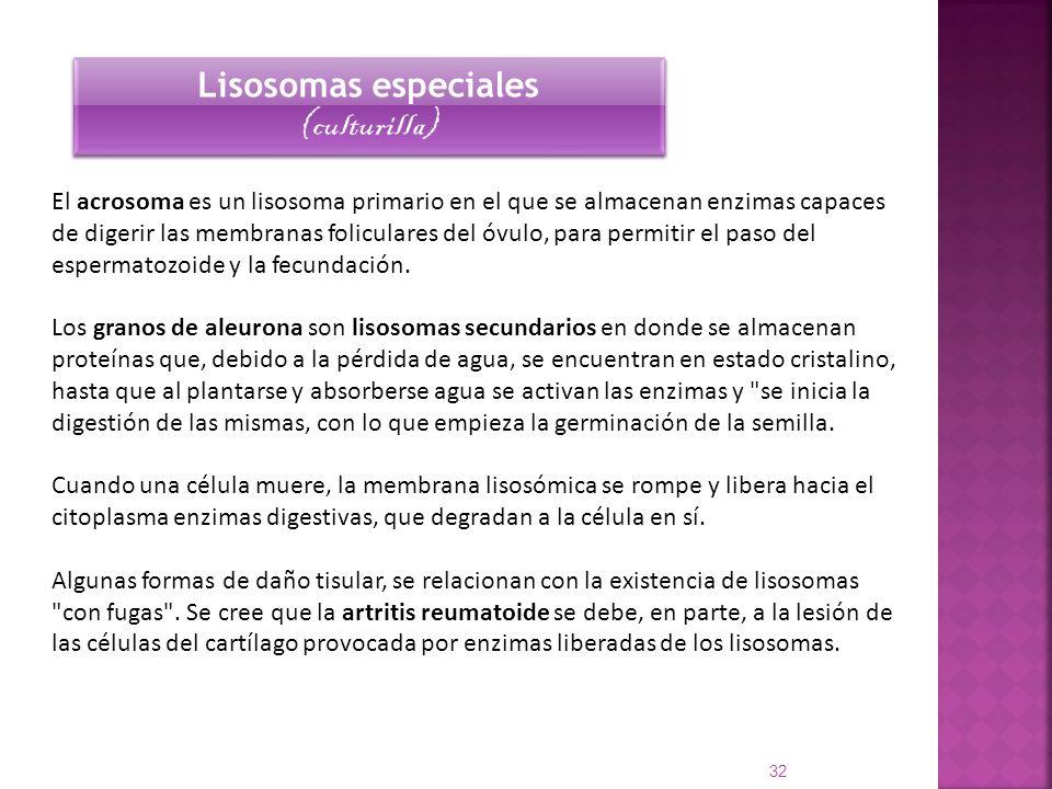 El acrosoma es un lisosoma primario en el que se almacenan enzimas capaces de digerir las membranas foliculares del óvulo, para permitir el paso del e