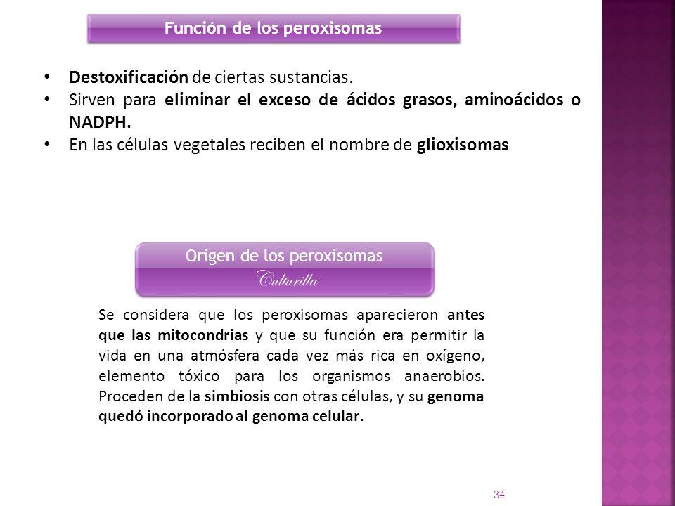Destoxificación de ciertas sustancias. Sirven para eliminar el exceso de ácidos grasos, aminoácidos o NADPH. En las células vegetales reciben el nombr