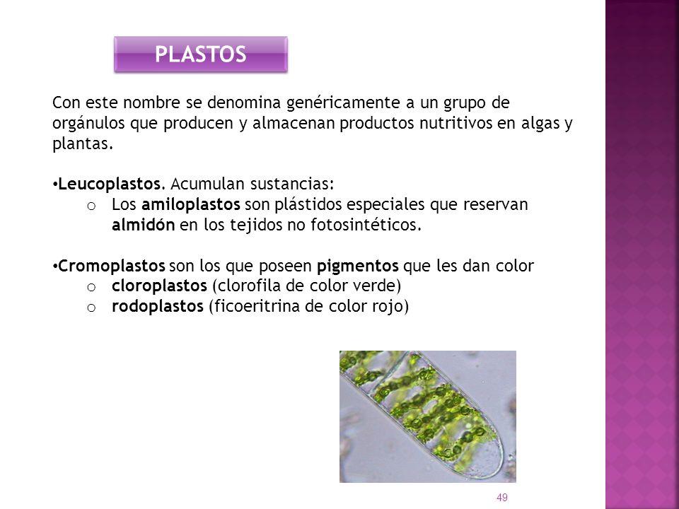 Con este nombre se denomina genéricamente a un grupo de orgánulos que producen y almacenan productos nutritivos en algas y plantas. Leucoplastos. Acum