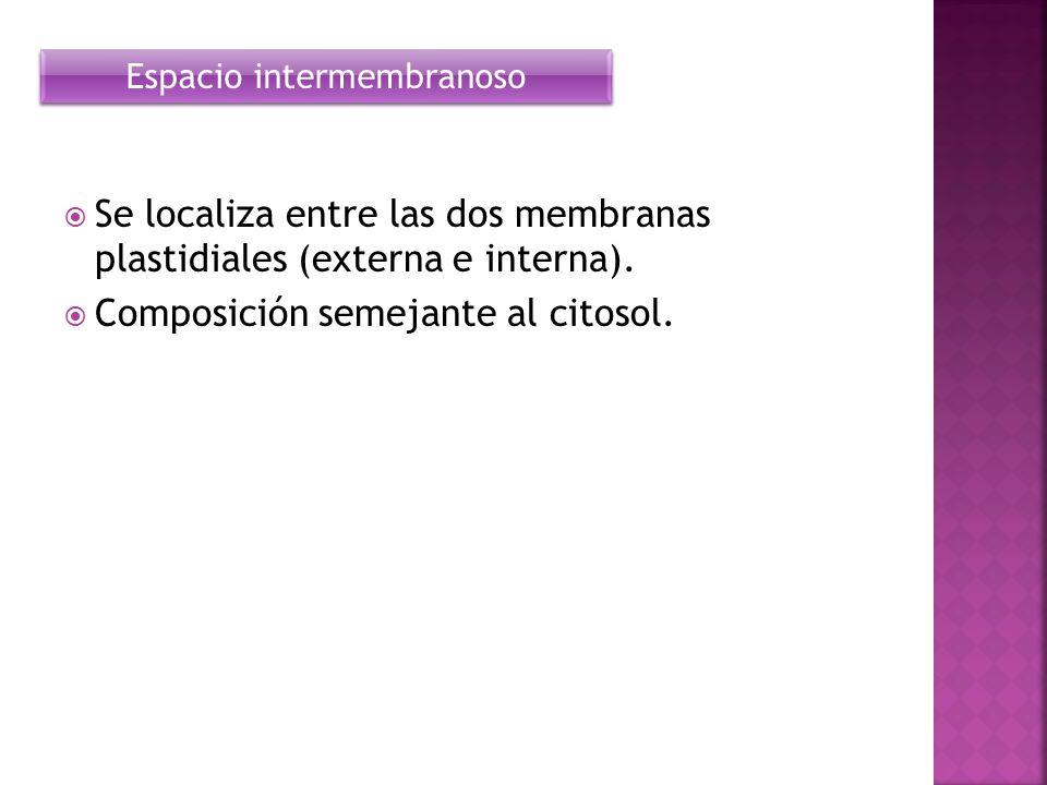 Se localiza entre las dos membranas plastidiales (externa e interna). Composición semejante al citosol. Espacio intermembranoso