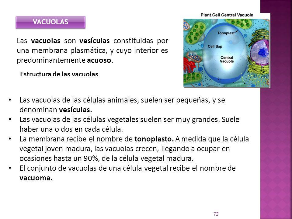 Las vacuolas de las células animales, suelen ser pequeñas, y se denominan vesículas. Las vacuolas de las células vegetales suelen ser muy grandes. Sue