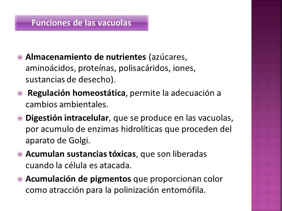 Almacenamiento de nutrientes (azúcares, aminoácidos, proteínas, polisacáridos, iones, sustancias de desecho). Regulación homeostática, permite la adec