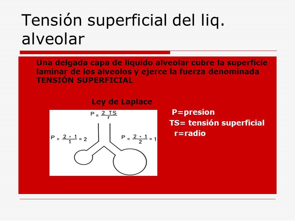 Tensión superficial del liq. alveolar Una delgada capa de liquido alveolar cubre la superficie laminar de los alveolos y ejerce la fuerza denominada T