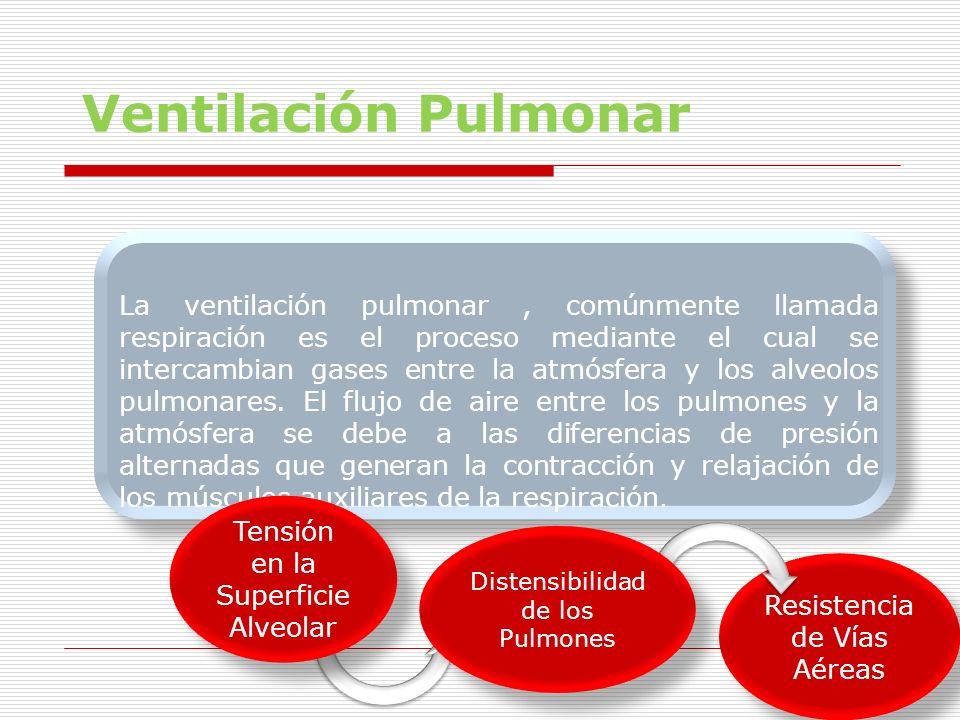 Ventilación Pulmonar La ventilación pulmonar, comúnmente llamada respiración es el proceso mediante el cual se intercambian gases entre la atmósfera y