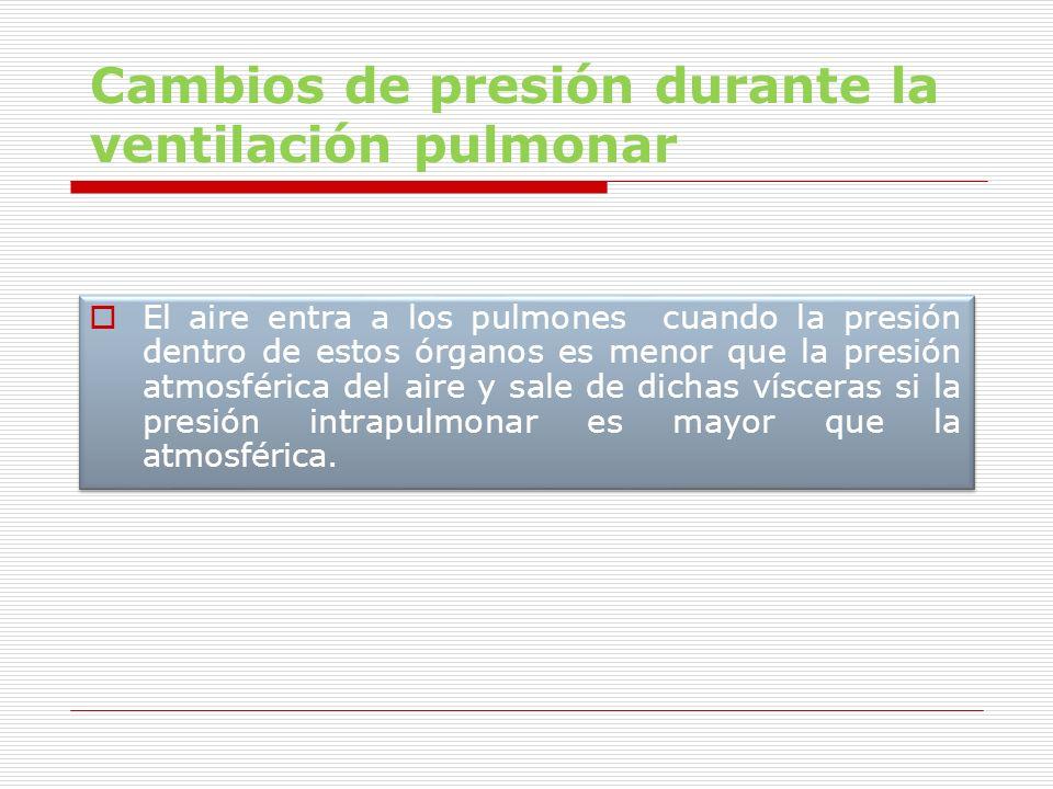 Cambios de presión durante la ventilación pulmonar El aire entra a los pulmones cuando la presión dentro de estos órganos es menor que la presión atmo