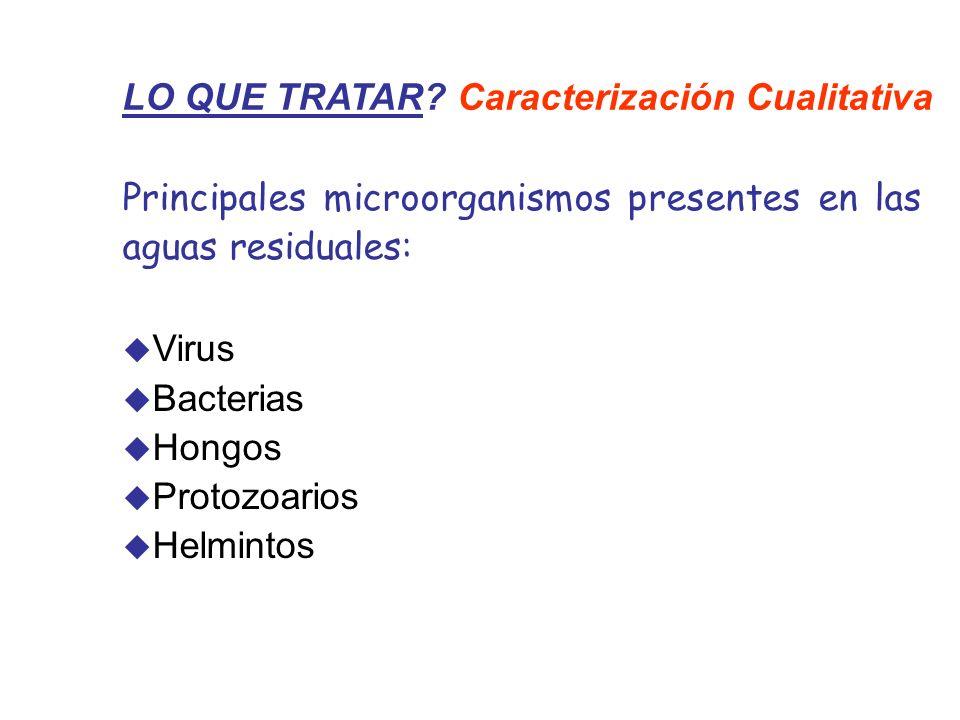 LO QUE TRATAR? Caracterización Cualitativa Principales microorganismos presentes en las aguas residuales: Virus Bacterias Hongos Protozoarios Helminto