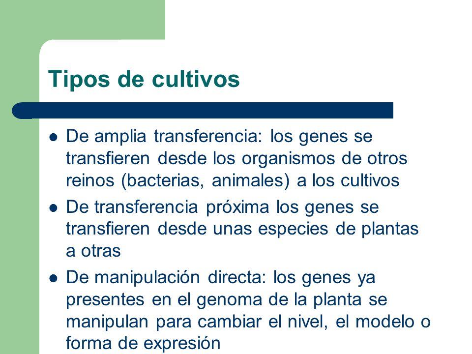 Tipos de cultivos De amplia transferencia: los genes se transfieren desde los organismos de otros reinos (bacterias, animales) a los cultivos De trans