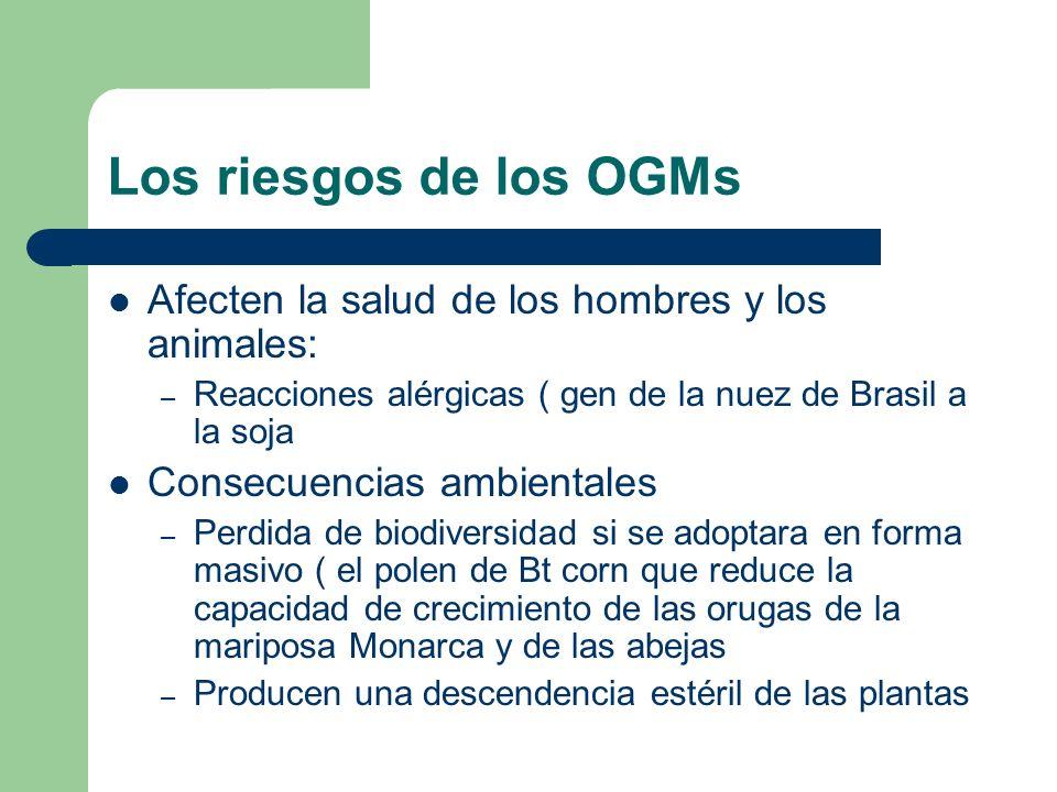 Los riesgos de los OGMs Afecten la salud de los hombres y los animales: – Reacciones alérgicas ( gen de la nuez de Brasil a la soja Consecuencias ambi