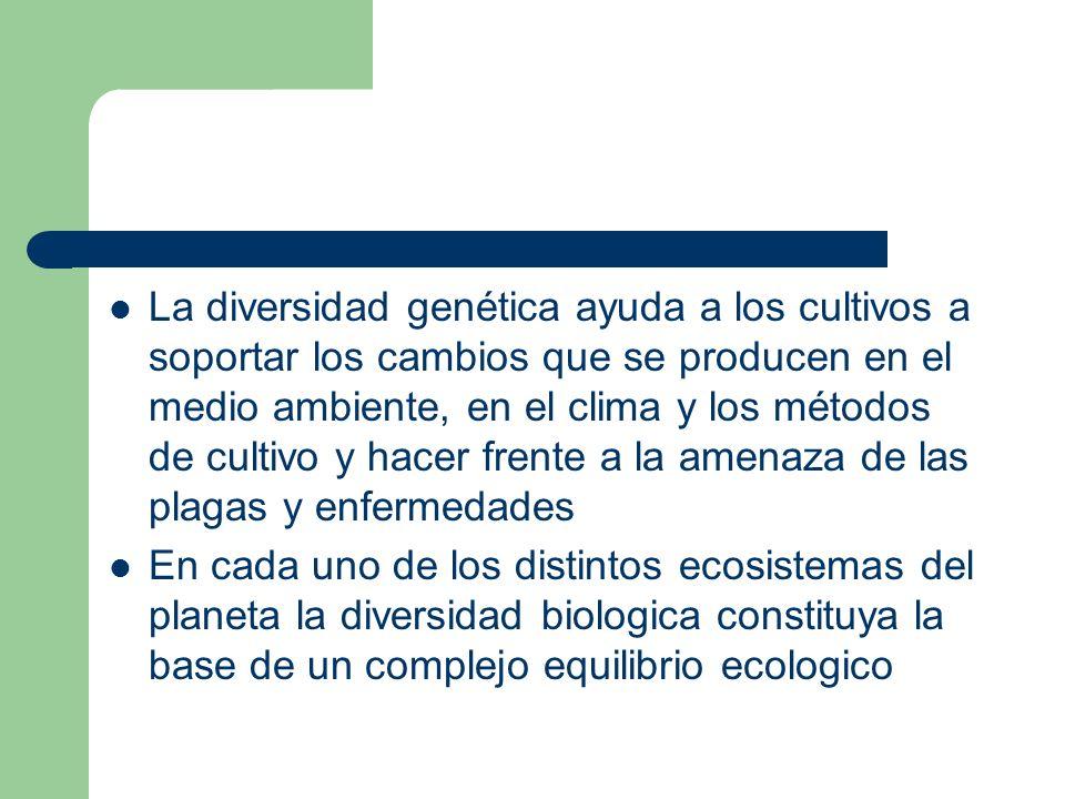 La diversidad genética ayuda a los cultivos a soportar los cambios que se producen en el medio ambiente, en el clima y los métodos de cultivo y hacer