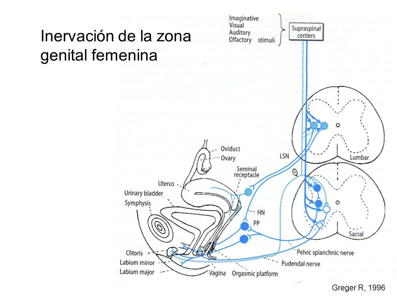 Greger R, 1996 Inervación de la zona genital femenina
