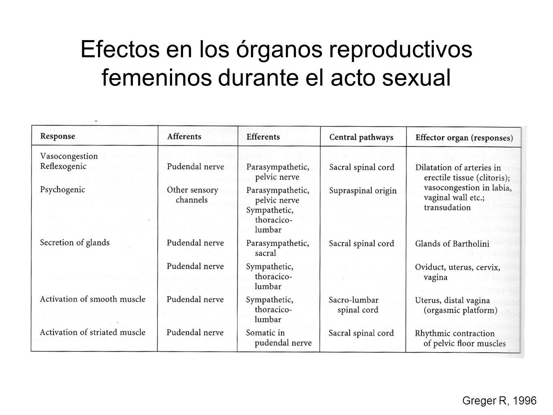 Efectos en los órganos reproductivos femeninos durante el acto sexual Greger R, 1996