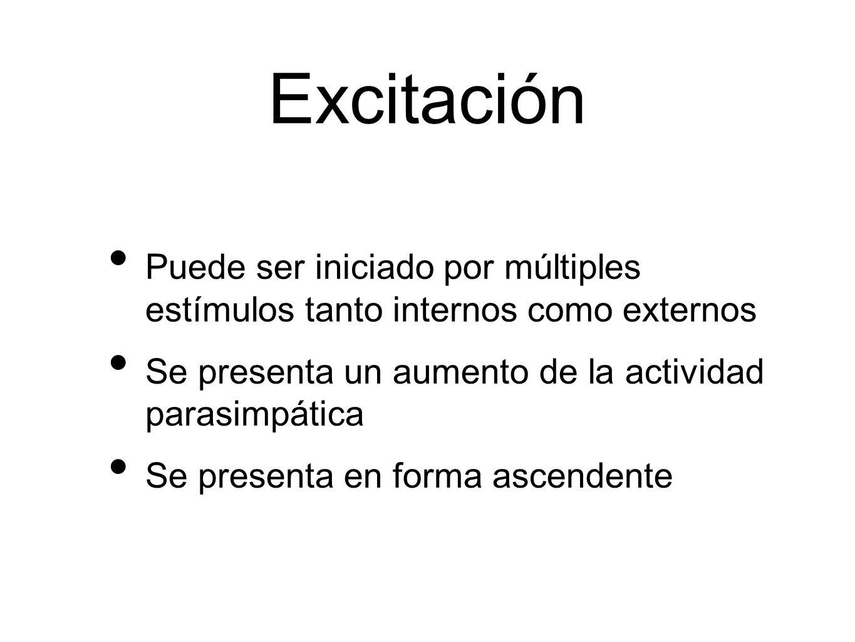 Excitación Puede ser iniciado por múltiples estímulos tanto internos como externos Se presenta un aumento de la actividad parasimpática Se presenta en