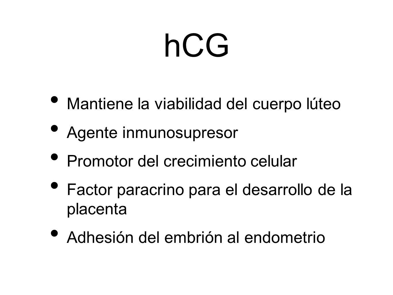 hCG Mantiene la viabilidad del cuerpo lúteo Agente inmunosupresor Promotor del crecimiento celular Factor paracrino para el desarrollo de la placenta
