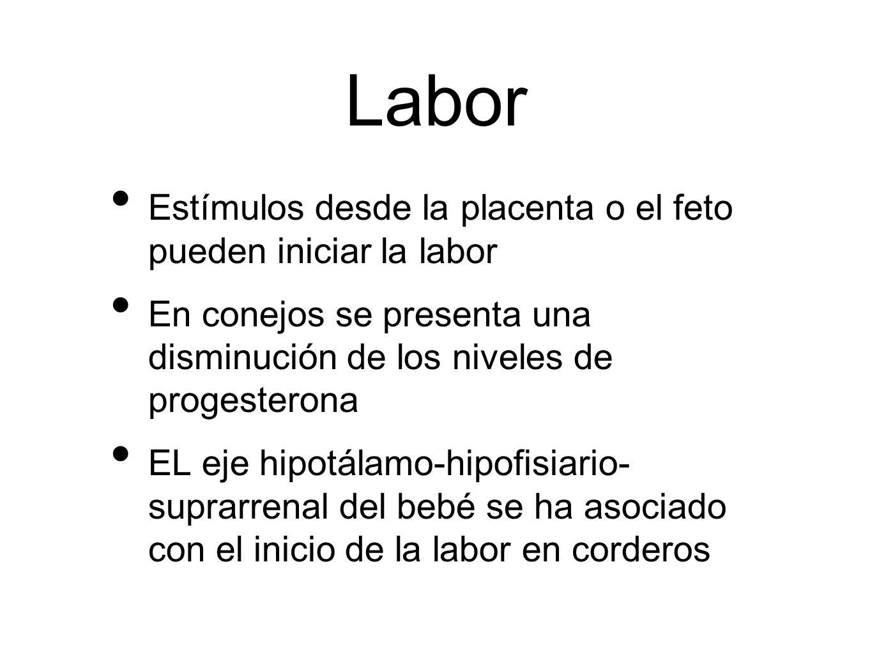 Labor Estímulos desde la placenta o el feto pueden iniciar la labor En conejos se presenta una disminución de los niveles de progesterona EL eje hipot