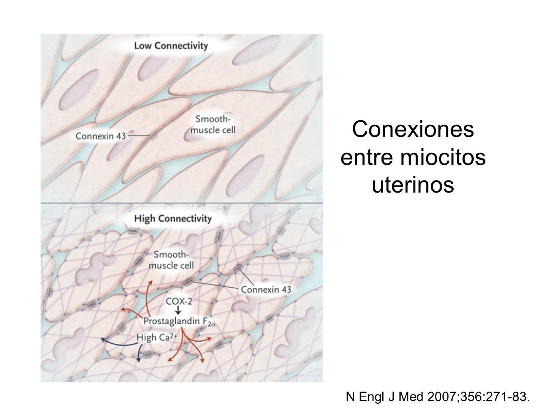 Conexiones entre miocitos uterinos N Engl J Med 2007;356:271-83.