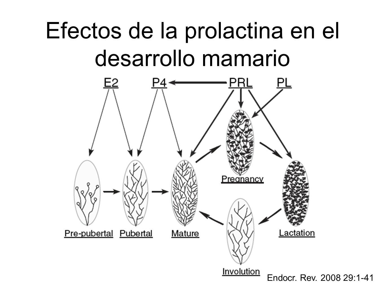 Efectos de la prolactina en el desarrollo mamario Endocr. Rev. 2008 29:1-41