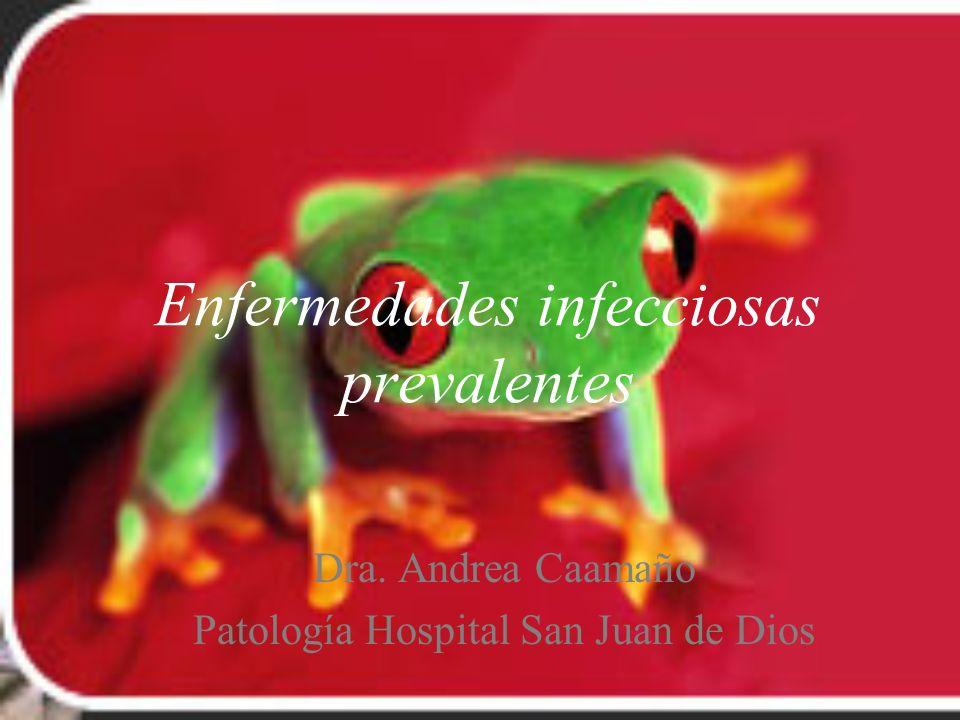 Enfermedades infecciosas prevalentes Dra. Andrea Caamaño Patología Hospital San Juan de Dios