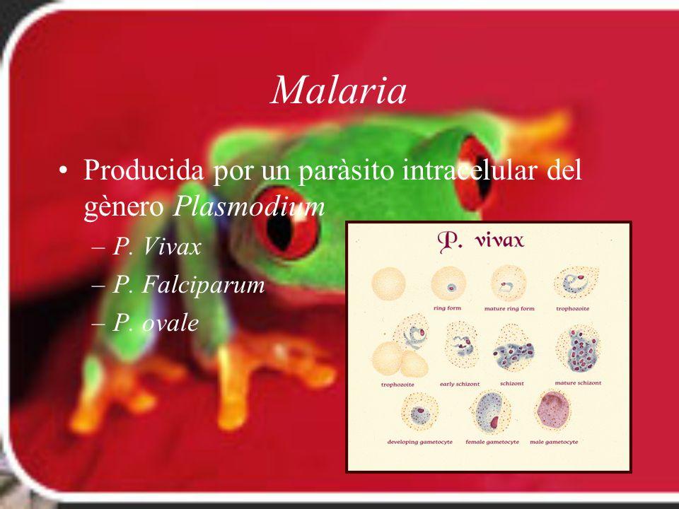 Malaria Producida por un paràsito intracelular del gènero Plasmodium –P. Vivax –P. Falciparum –P. ovale