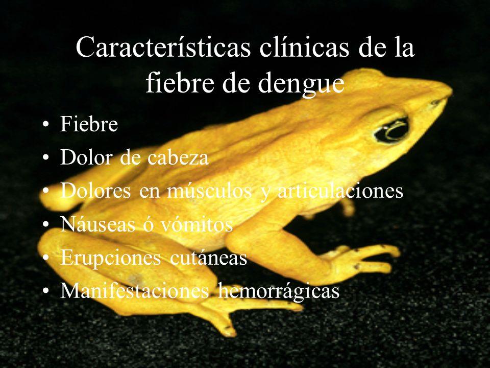 Características clínicas de la fiebre de dengue Fiebre Dolor de cabeza Dolores en músculos y articulaciones Náuseas ó vómitos Erupciones cutáneas Mani