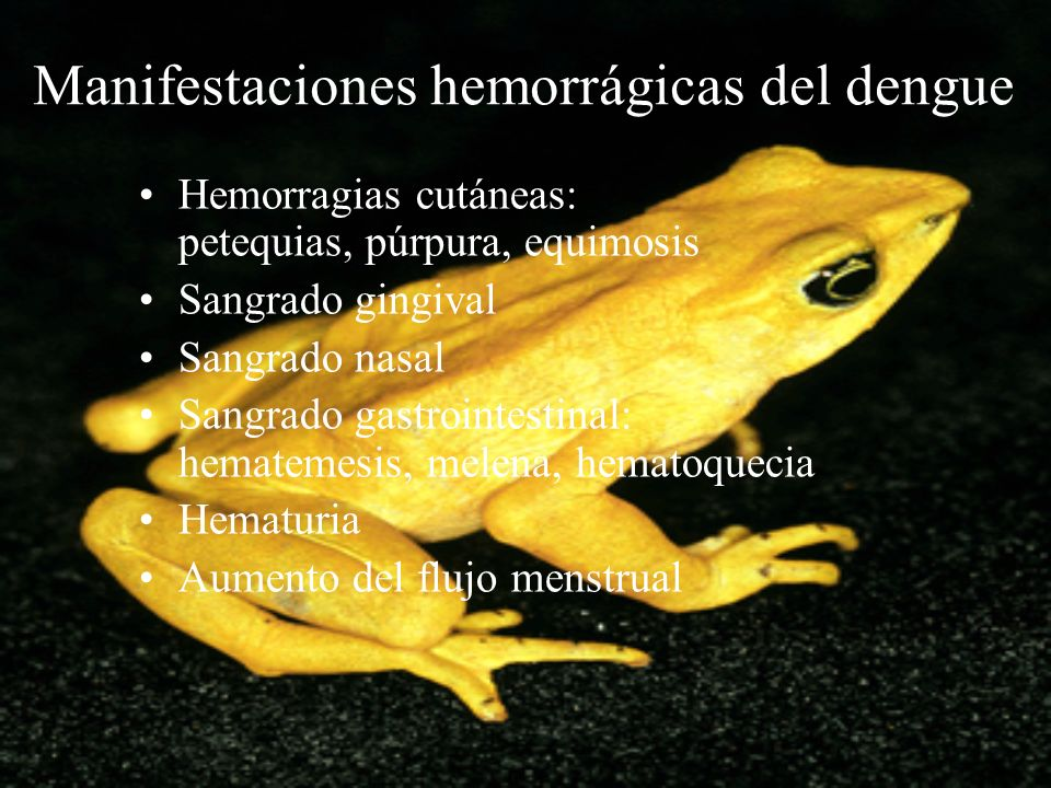 Manifestaciones hemorrágicas del dengue Hemorragias cutáneas: petequias, púrpura, equimosis Sangrado gingival Sangrado nasal Sangrado gastrointestinal