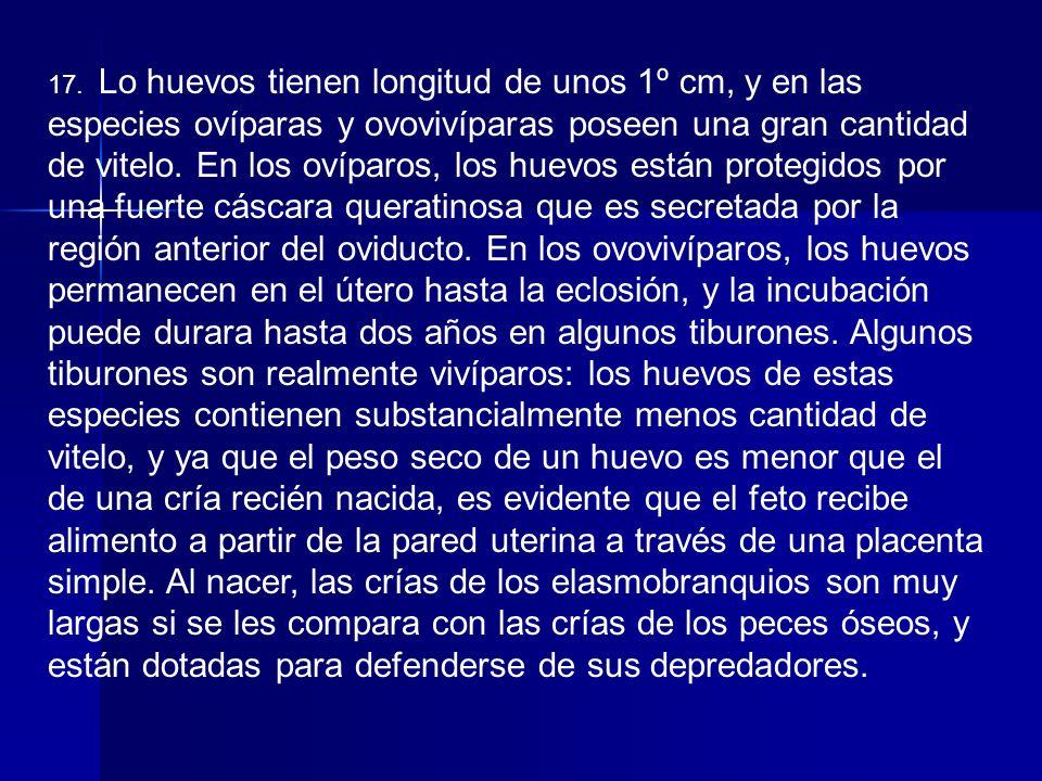 OTRAS CARACTERISTICAS DE LOS ELASMOBRANQUIOS 1.