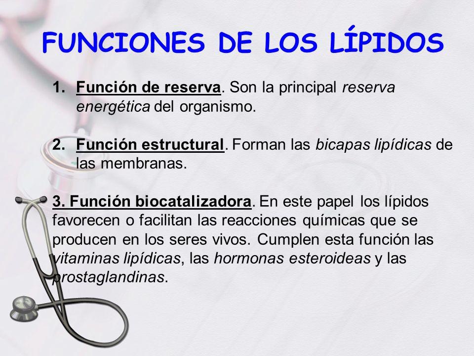 FUNCIONES DE LOS LÍPIDOS 1.Función de reserva. Son la principal reserva energética del organismo. 2.Función estructural. Forman las bicapas lipídicas