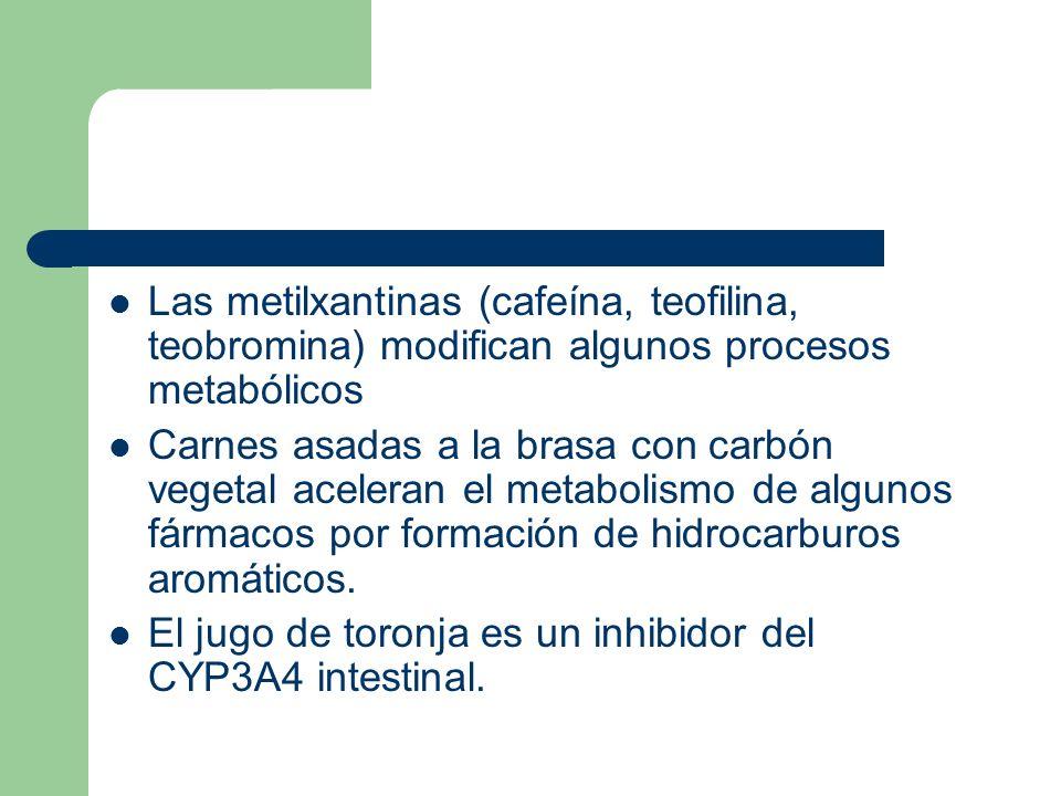 Las metilxantinas (cafeína, teofilina, teobromina) modifican algunos procesos metabólicos Carnes asadas a la brasa con carbón vegetal aceleran el meta