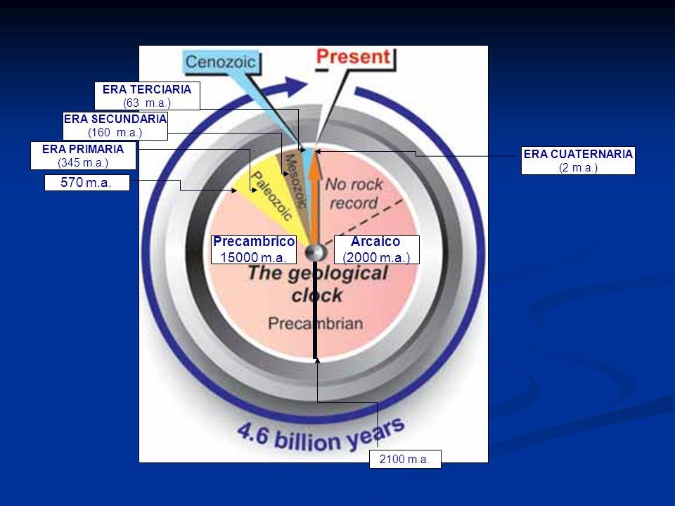 Arcaico (2000 m.a.) Precambrico 15000 m.a. 570 m.a. ERA PRIMARIA (345 m.a.) ERA SECUNDARIA (160 m.a.) ERA TERCIARIA (63 m.a.) ERA CUATERNARIA (2 m.a.)