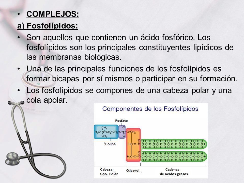 COMPLEJOS: a) Fosfolípidos: Son aquellos que contienen un ácido fosfórico. Los fosfolípidos son los principales constituyentes lipídicos de las membra