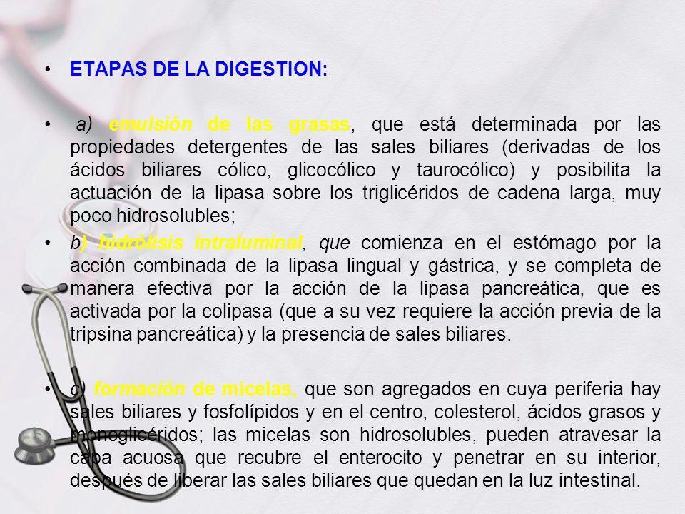 ETAPAS DE LA DIGESTION: a) emulsión de las grasas, que está determinada por las propiedades detergentes de las sales biliares (derivadas de los ácidos