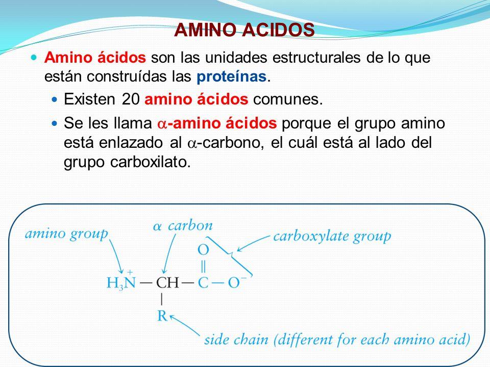 AMINO ACIDOS Amino ácidos son las unidades estructurales de lo que están construídas las proteínas. Existen 20 amino ácidos comunes. Se les llama -ami