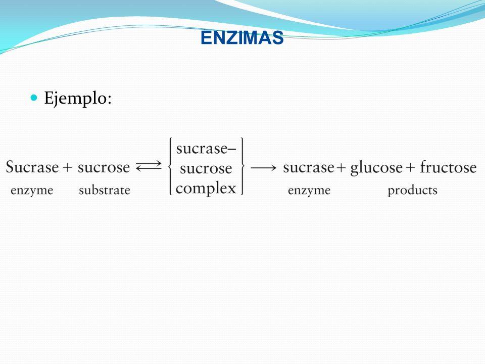 ENZIMAS Ejemplo: