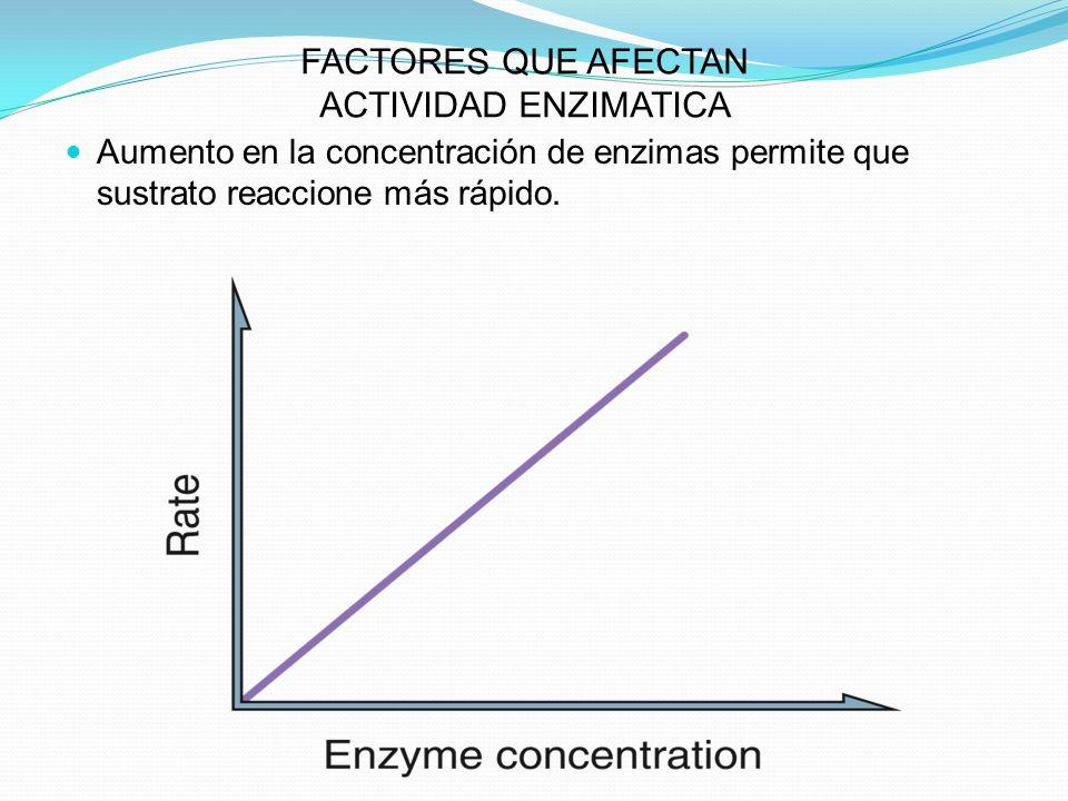 FACTORES QUE AFECTAN ACTIVIDAD ENZIMATICA Aumento en la concentración de enzimas permite que sustrato reaccione más rápido.