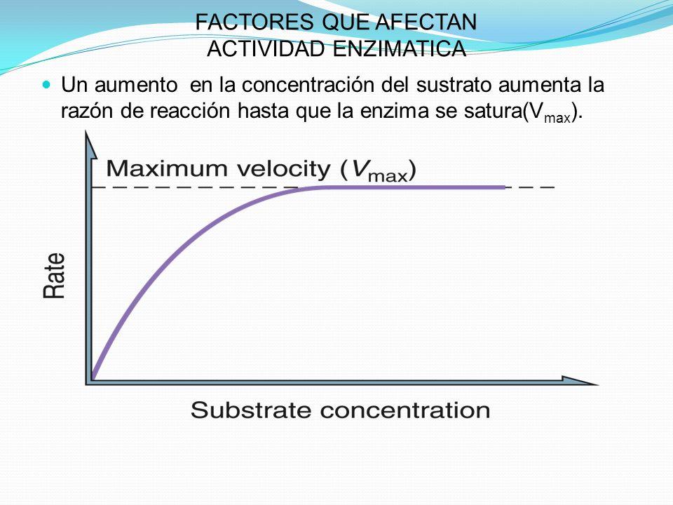 FACTORES QUE AFECTAN ACTIVIDAD ENZIMATICA Un aumento en la concentración del sustrato aumenta la razón de reacción hasta que la enzima se satura(V max