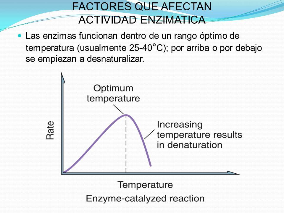 FACTORES QUE AFECTAN ACTIVIDAD ENZIMATICA Las enzimas funcionan dentro de un rango óptimo de temperatura (usualmente 25-40 ° C); por arriba o por deba