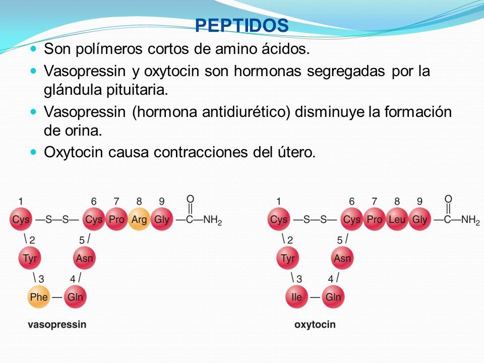 PEPTIDOS Son polímeros cortos de amino ácidos. Vasopressin y oxytocin son hormonas segregadas por la glándula pituitaria. Vasopressin (hormona antidiu