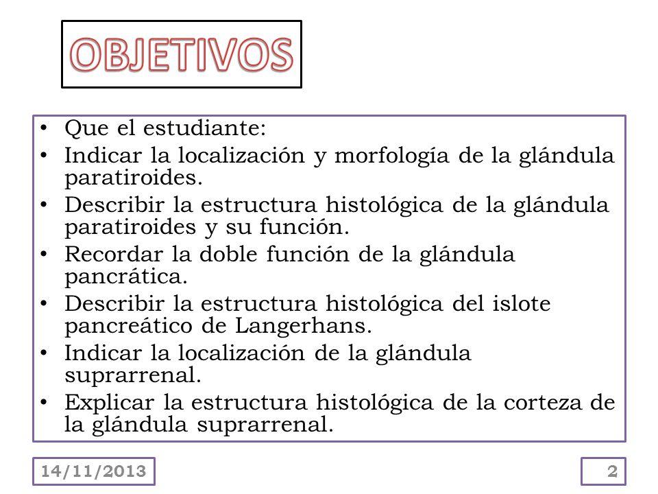 Que el estudiante: Indicar la localización y morfología de la glándula paratiroides. Describir la estructura histológica de la glándula paratiroides y