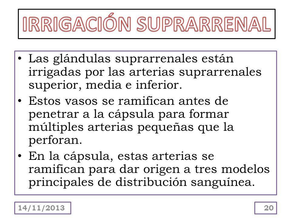 Las glándulas suprarrenales están irrigadas por las arterias suprarrenales superior, media e inferior. Estos vasos se ramifican antes de penetrar a la