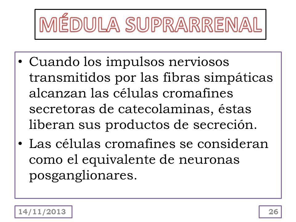 Cuando los impulsos nerviosos transmitidos por las fibras simpáticas alcanzan las células cromafines secretoras de catecolaminas, éstas liberan sus pr