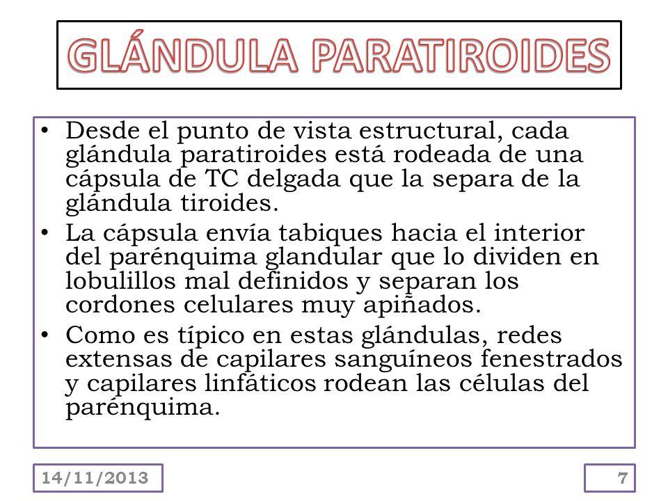 Desde el punto de vista estructural, cada glándula paratiroides está rodeada de una cápsula de TC delgada que la separa de la glándula tiroides. La cá